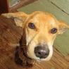 川に落ちていた母犬。人が大好きです! サムネイル3
