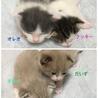 【現在お見合い待ち】オレオとだいず☆兄弟子猫 サムネイル4