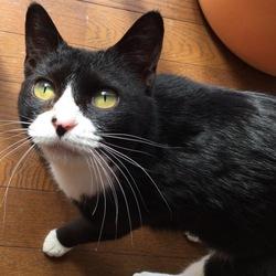里親様決定☆迷子の猫ちゃんの飼い主様を探しています
