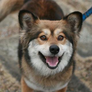 モコモコの可愛いミックス犬