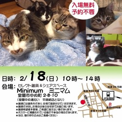 【室蘭市】保護猫の譲渡会