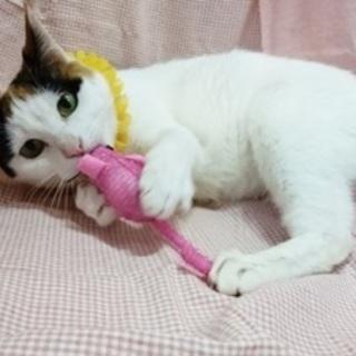 【2/24猫の未来とびら譲渡会】たーちゃん★3歳