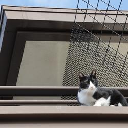猫の運動場☆青空カフェ その1