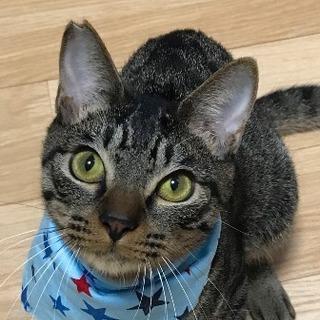 【2/18猫の未来とびら譲渡会】おはぎくん★8ヶ月