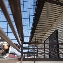 猫の運動場☆青空カフェ その2