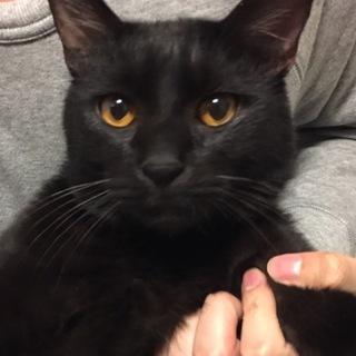 ゴロスリの黒猫ちゃんの里親さん募集♪