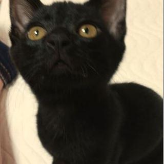 生後7か月 甘えん坊ストーカー猫のクロスケ君♪