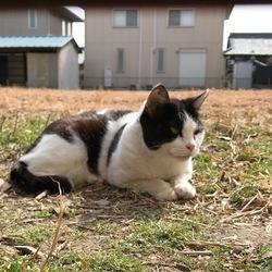 地域猫 福ちゃん