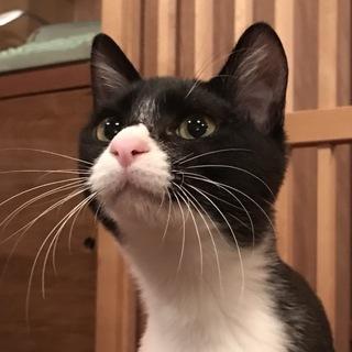 ぴょんぴょんジャンプ。元気な白黒猫