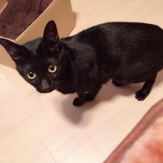 甘えん坊の黒猫くん(mix)*2歳