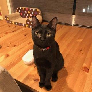 お耳をチュッチュ!甘えん坊の黒猫チュチュ