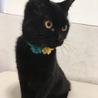 おてんばな子と臆病だけど遊ぶのが好きな黒猫兄弟 サムネイル3