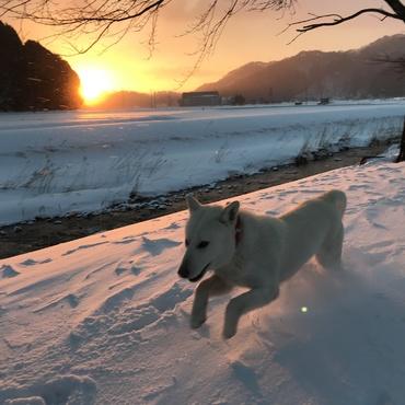 朝から雪の中を走り回っています