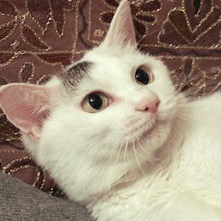 小柄で穏やかで愛らしい*飼育放棄シニア猫たまちゃん