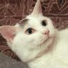 抱っこ好きで愛らしい*飼育放棄シニア猫たまちゃん