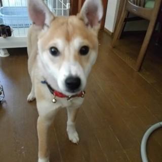 可愛い子犬です。飼い主さん募集しています。