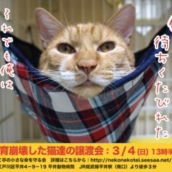 江戸川区多頭飼育崩壊した猫たちの譲渡会