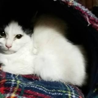 可愛い子猫の里親様を探しています!