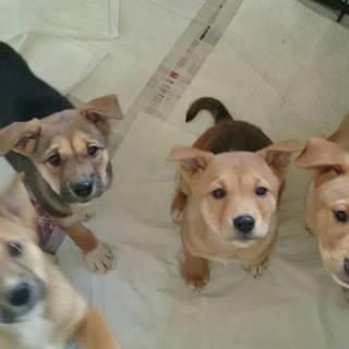 子犬4兄弟