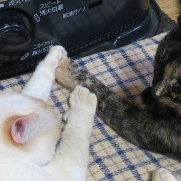 白いネコと黒いネコ 「ぼくたちずっと一緒にいれるかなぁ~・・・・」」