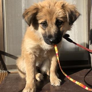 生後約4ヶ月位の子犬の女の子です。兄弟犬もいます。