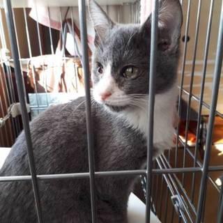 4ヶ月くらいの仔猫⭐超人懐っこいです!