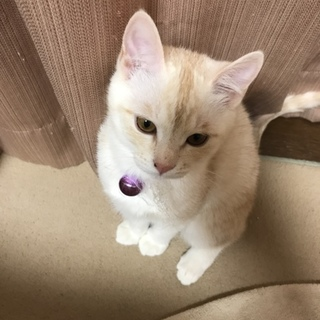 美人なしろ栗色猫ちゃんです