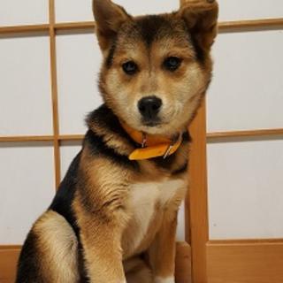 再募集☆子犬4ヶ月☆おしるこちゃん