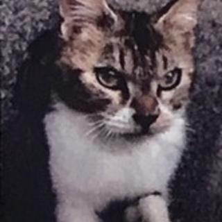 大人しい猫に癒されたい家族募集中
