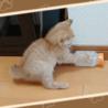 ミルクの容器で遊ぶうちの茶トラ猫です