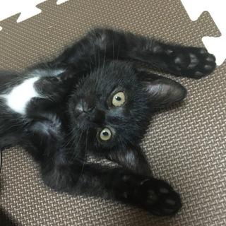 綺麗な毛並みのハンサム猫★