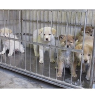 離島の保健所子犬5きょうだいが助けを待ってます