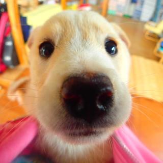 タレ目の仔犬 側溝から救出!