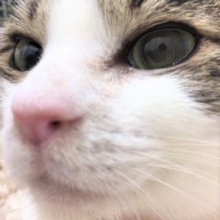 美猫の紅ちゃん わんこ大好き!