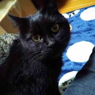 一斉TNR!黒猫♀