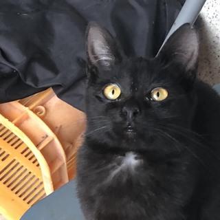 黒猫が好きな方、家族にして下さい