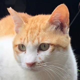 活発な猫に元気と癒しを求める家族募集‼︎