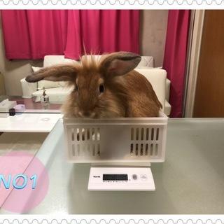 ウサギの里親さんを募集しています