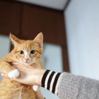 猫達がいる場所に突然現れた茶トラ君