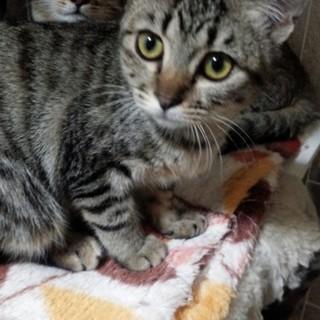 美人猫ちゃん ミミちゃん