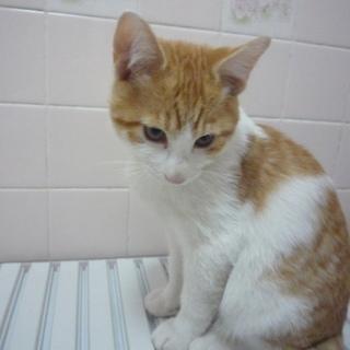 とてもかわいいネコちゃんです