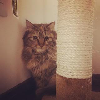 長毛種の外猫。寒空の中一緒に生活して3ニャン