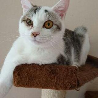 ツンデレ猫☆コメちゃん