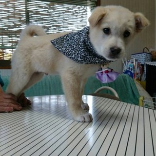 モコモコ可愛い子犬 男の子