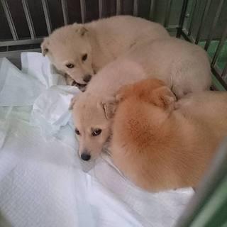 犬舎満員『野犬3ヶ月位の子犬組』4匹います②