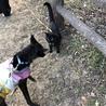 黒犬と黒猫ちゃん