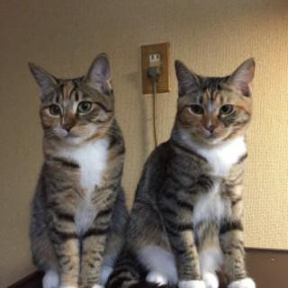 [代理投稿] サバシロ 美ネコ2姉妹