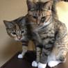 [代理投稿] サバシロ 美ネコ2姉妹 サムネイル2