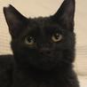 里親さま決まりました☆やんちゃな黒猫男の子