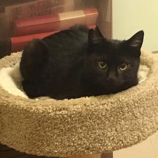 黒猫のマルミちゃん♥